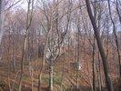 08-skaaki-w-lesie